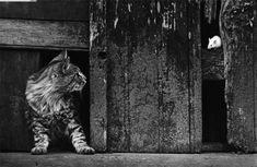 Pedro Luis Raota (Argentina 1934-1986) fue uno de los fotógrafos argentinos más admirados y premiados de su época en su país. Figuras centrales iluminadas con fondo oscuro, momentos decisivos, escenas curiosas, imágenes poéticas…todos esto y mucho más forma parte de su estilo inconfundible.