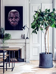 voguelivingmagazine:  How to choose the perfect plant for your home interior - Vogue Living