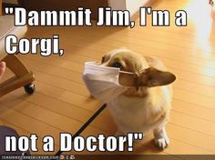 """Dammit Jim, I'm a Corgi, not a doctor!"" Corgi in a doctor's mask.  Corgi Love.  Corgi Humor."