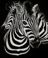 zebra art - Google Search