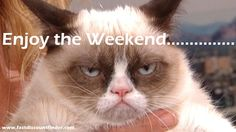 fastdiscountfinder.com | Enjoy a Grumpy Cat Weekend! | http://fastdiscountfinder.com