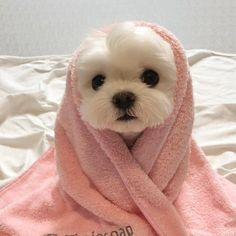 cute dogs - cute dogs ` cute dogs and puppies ` cute dogs breeds ` cute dogs wallpaper ` cute dogs funny ` cute dogs videos ` cute dogs aesthetic ` cute dogs small Super Cute Puppies, Baby Animals Super Cute, Cute Baby Dogs, Cute Little Puppies, Cute Dogs And Puppies, Cute Little Animals, Cute Funny Animals, Doggies, Funny Dogs