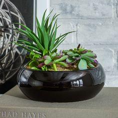 Mercury Row Faux Succulents & Reviews   Wayfair