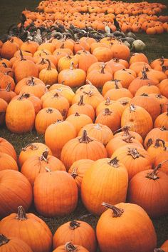 ≫ you are my ☼, my ☾, & all my ✩s ≪ {@summerbreeze801} Fall Pumpkins, Halloween Pumpkins, Fall Halloween, Fall Season Pictures, Autumn Aesthetic, Happy Fall Y'all, Fall Harvest, Autumn Inspiration, Autumn Leaves