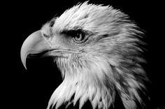 Incredible Animal Photo Portraits - Photography - ShortList Magazine