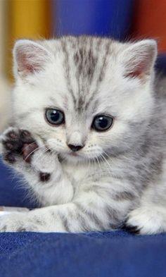 Cute baby kitten