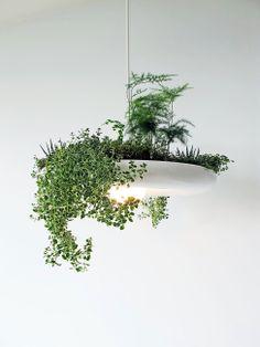 Светильник или горшок для растений?