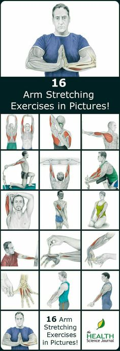 We have a new entry into our stretching series. Today we'll present 16 illustrations of arm stretching exercises showing you exactly which muscle you are exercising. By demonstrating where on your body you should feel the highest tension we hope to help Fitness Workouts, Lower Ab Workouts, Sport Fitness, Butt Workout, Fitness Motivation, Health Fitness, Week Workout, Cardio Workouts, Exercise Motivation