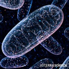 Increasing reactive oxygen species (ROS) in mitochondria has recently emerged as a key element in expanding lifespan.