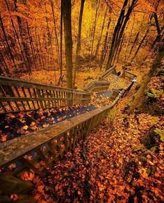 [New] The 10 Best Travel Ideas Today (with Pictures) - Mono Cliffs Provincial Park Ontario Canada. Photo by: Foto Nature, All Nature, Ontario Travel, Autumn Scenery, Excursion, Fall Pictures, Belleza Natural, Canada Travel, Hiking Trails