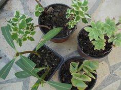 Plantes à bouturer facilement : boutures gratuites et très faciles à réussir | Suite101