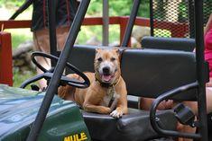 Grand Cherokee Trailhawk, Dogs, Animals, Animales, Animaux, Pet Dogs, Doggies, Animal, Animais