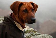 """Lamentável """"Após a leitura da sentença, o juiz resolveu tecer considerações morais em relação a Diogo Castiço por ter usado a morte do cão (que o juiz apelidou de """"coisa"""") como """"porta-estandarte nas redes sociais"""" e aconselhou-o a não deixar os cães à solta."""""""