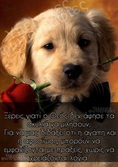 Greek Quotes, Wise Quotes, Greek Words, Meaningful Quotes, Cute Baby Animals, Deep Thoughts, Dog Love, Cute Babies, Psychology