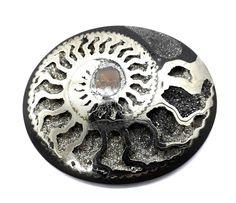 Pyrite Ammonite with Belemnite, ID mm Ammonite, Ebay