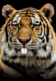 hiltl_vegetarian_tiger.jpeg (1280×1866)