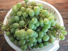 Grape, Picked Bunches in a Collander