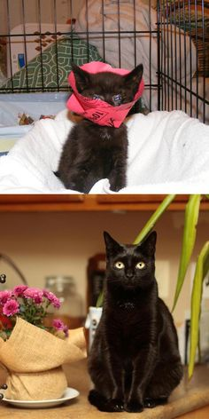 Meet Binx, as a kitten she was beaten and stomped on by a bad person, and left to die in the streets of NYC with her insides hanging out.  Vet suggested she be put down, but a volunteer operated and here she is 5 years later!