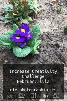 Mein Beitrag zur Increase Creativity Challenge im Februar zur Farbe lila und den vier Elementen Feuer, Wasser, Luft und Erde. Lettering, Blogging, Challenges, Creative, Creative Things, February, Earth, Water, Drawing Letters