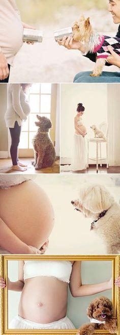fotos inspiradoras para el embarazo con tu mascota