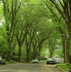 Did you know that trees in U.S. urban areas store an estimated 708 million tons of carbon? | Via U.S. Forest Service