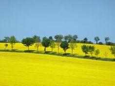 yellow world - Cerca con Google
