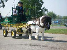 Like this John Deere Green and Yellow cart and love the mini! Miniature Horse Barn, Miniature Ponies, Farm Animals, Animals And Pets, Cute Animals, Mini Horse Cart, Pull Wagon, Tiny Horses, Mini Pony