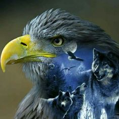 Eagles and wolves together Native American Wisdom, Native American Pictures, Native American Artwork, American Indian Art, Eagle Images, Eagle Pictures, Wolf Pictures, Beautiful Wolves, Animals Beautiful