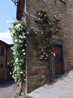 Volpaia Florence Tuscany Italy