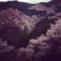 Yoshino mountain