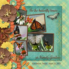 In the butterfly house ... layout made by CT artist poki featuring Sherwood Studio digital scrapbooking kit SEPTEMBER SIGHS http://www.thedigichick.com/shop/September-Sighs-Bundle.html and digital template kit from Sherwood Studio THE PHOTO PROJECT - STORYTELLER http://www.thedigichick.com/shop/The-Photo-Project-Storyteller.html