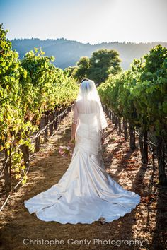 Wedding Dress - Bride - Vineyards - Christophe Genty - Napa Valley Wedding Photography - SF Bay Area