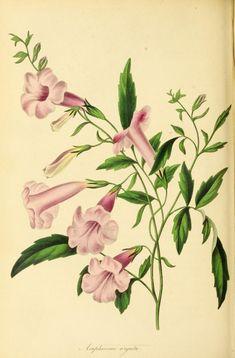 v.6 (1840) - Paxton's magazine of botany, - Biodiversity Heritage Library