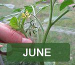 Jobs in the garden - June