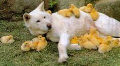 犬とヒヨコ、猫とウサギ……異種類同士仲良く眠る動物たちが可愛すぎる!!