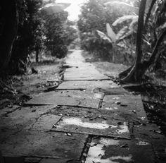Path in the delta Paths, Sidewalk, Walkways, Pavement, Curb Appeal