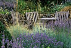 A sitting area by a stone retaining wall in a California garden with Helictotrichon sempervirens (Blue Oat Grass), Lavender and Caryopteris. Photo: Saxon Holt / Saxon Holt Photography / ONLINE_CHECK