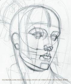 www.facebook.com/... #anatomy #head #drawing #draw #math