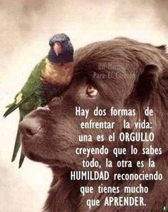 Ptsd Quotes, Amor Quotes, Postive Quotes, Wisdom Quotes, Spiritual Quotes, Spanish Inspirational Quotes, Spanish Quotes, Latin Quotes, Life Lesson Quotes
