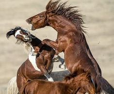 Wild Horse Freedom - Tales from the Backroad Pretty Horses, Horse Love, Beautiful Horses, Horse Photos, Horse Pictures, Amazing Animal Pictures, Animal Pics, Fire Horse, Wild Mustangs