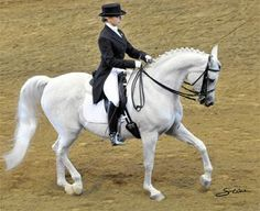 How an arabian gelding became the most successful of his breed in US dressage. Andalusian Horse, Arabian Horses, Friesian Horse, Rare Horses, Horse Magazine, Most Beautiful Horses, Dressage Horses, White Horses, Equine Photography