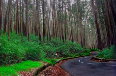 Ooty : Budget Hotels, Best Hill Resort, Cottages: Pine Forest Ooty