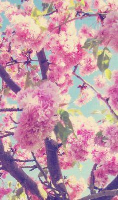 I love blossoms, so pretty!