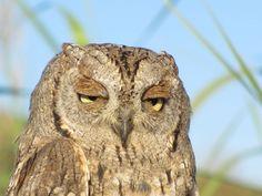 Durante le attività di birdwatching della Lega Navale, presso la Stazione di Inanellamento é possibile avere incontri ravvicinati con esemplari rari che dopo essere stati studiati e inanellati vengono subito rilasciati.