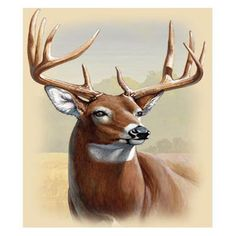 Deer drawing - Whitetail Deer Facts, Information, and Photos – Deer drawing Wildlife Paintings, Wildlife Art, Animal Paintings, Deer Paintings, Whitetail Deer Pictures, Deer Photos, Pictures Of Deer, Deer Photography, Deer Drawing