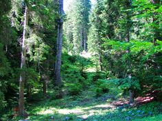 nature parks | Adamello Brenta Nature Park (Nature)