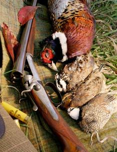Quail and Pheasants. #Hunting #Upland