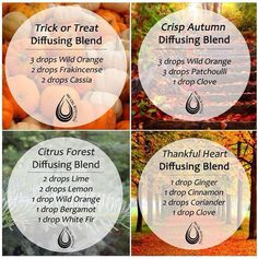 Can't wait to try out these fall blends in my house!