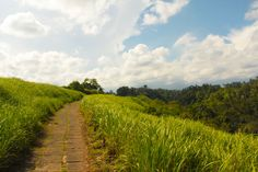 The path for walking, jogging and trekking