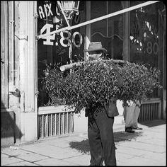 photos-vieux-metiers-de-paris-1900-marchand-de-gui.jpg